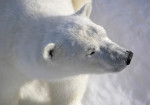 Arctic Cruise Adventure: Norway, Greenland & Iceland