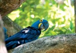 Brazil's Pantanal: A Wildlife Adventure