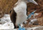Untamed Southern Galapagos
