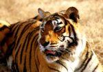 India Safari