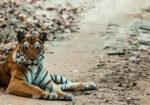 Culture & Wildlife of India with Nadia Eckhardt